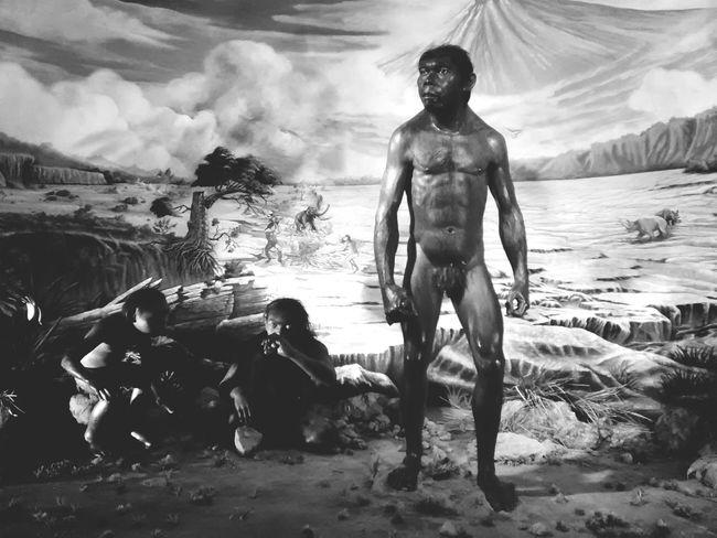 Early man of java Museum Prehistoric Primordial Javanese