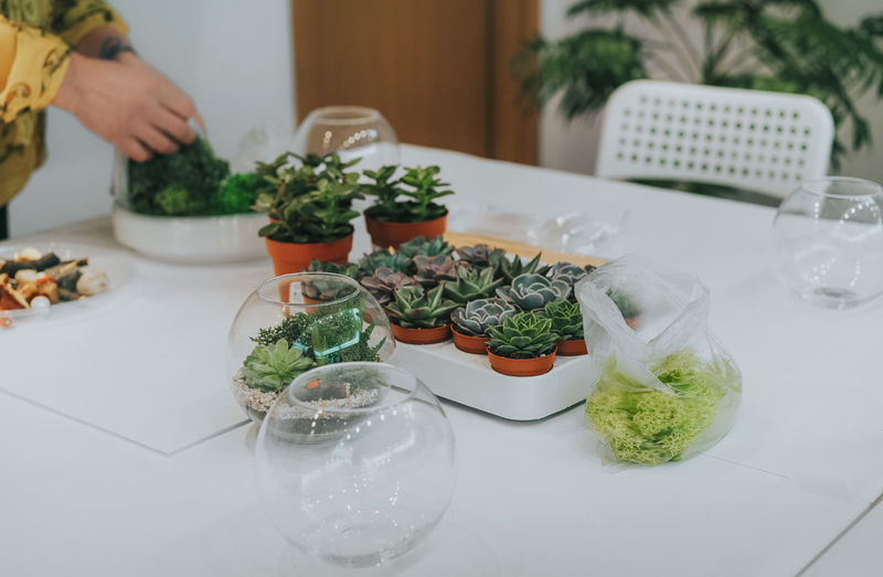 Terrarium class. Workshop Class Succulent Plant Succulents Plant Plants Terrarium Table Vase Human Hand Herb Preparation  Close-up Growing
