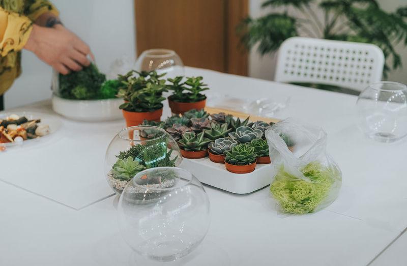 Terrarium class. Workshop Class Succulent Plant Succulents Plant Plants Terrarium Table Vase Human Hand Herb Preparation  Close-up Growing