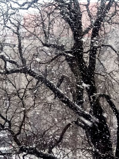 Wintertime City Berlin Snow Snowflake Tree Branch Backgrounds Winter Full Frame Close-up