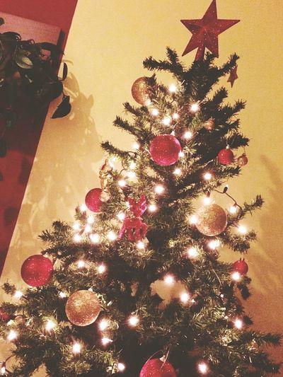 Christmas Christmas Tree Celebration Christmas Decoration Tree Tradition Christmas Ornament Illuminated Christmas Lights No People Holiday - Event Indoors  Close-up 🎄🎉😊