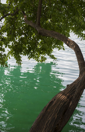 Scenic view of tree by lake