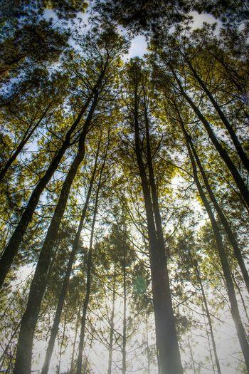 Vinewoowd Landscapes INDONESIA Indonesia_photography Green Instanusantara Bandung Morning Landscape_Collection Landscape_photography Photography Vinewood Wild Tree Trees