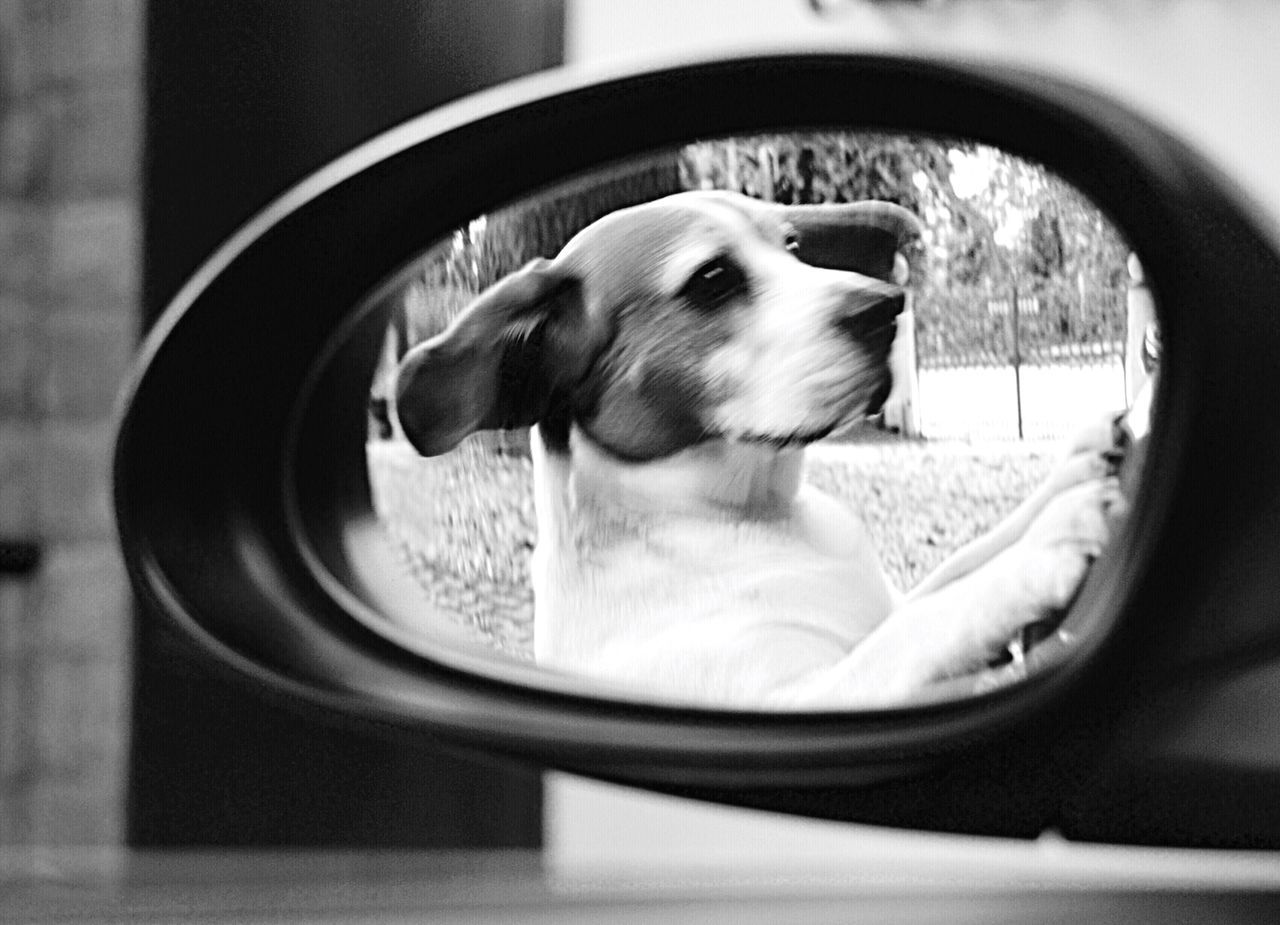 Reflection of dog on side-view mirror