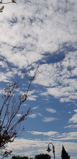 Tree Sky Landscape