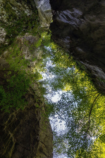 Low angle view of waterfall amidst trees in forest
