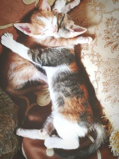 Inborn Love Indoors  Domestic Animals One Animal No People Feline first eyeem photo