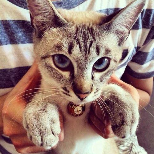 Cat♡ ❤ It's Life