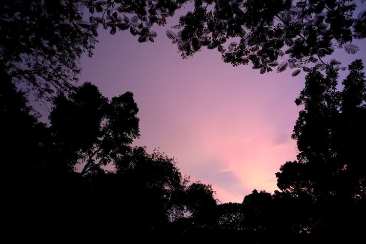 Dramatic atmosphere panorama view of silhouette landscape with beautiful twilight sky. Beauty In Nature Branch Cloud - Sky Dusk Growth Idyllic Low Angle View Nature Night No People Non-urban Scene Outdoors Plant Scenics - Nature Silhouette Silhouette Photography Sky Sunset Tranquil Scene Tranquility Tree