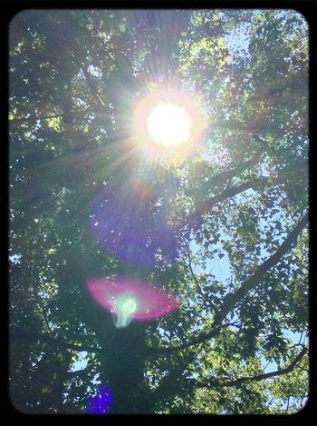 Nature Sun Forest Eye