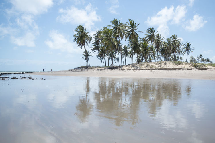 """""""Maracajaú"""" Beach Beauty In Nature Brasil Brazil Cloud - Sky Day Landscape Maracajau Nature Outdoors Palm Tree Paradise Rio Grande Do Norte Rio Grande Do Norte, Brasil Sand Scenics Sea Sky Tranquil Scene Tranquility Water Lost In The Landscape Been There."""