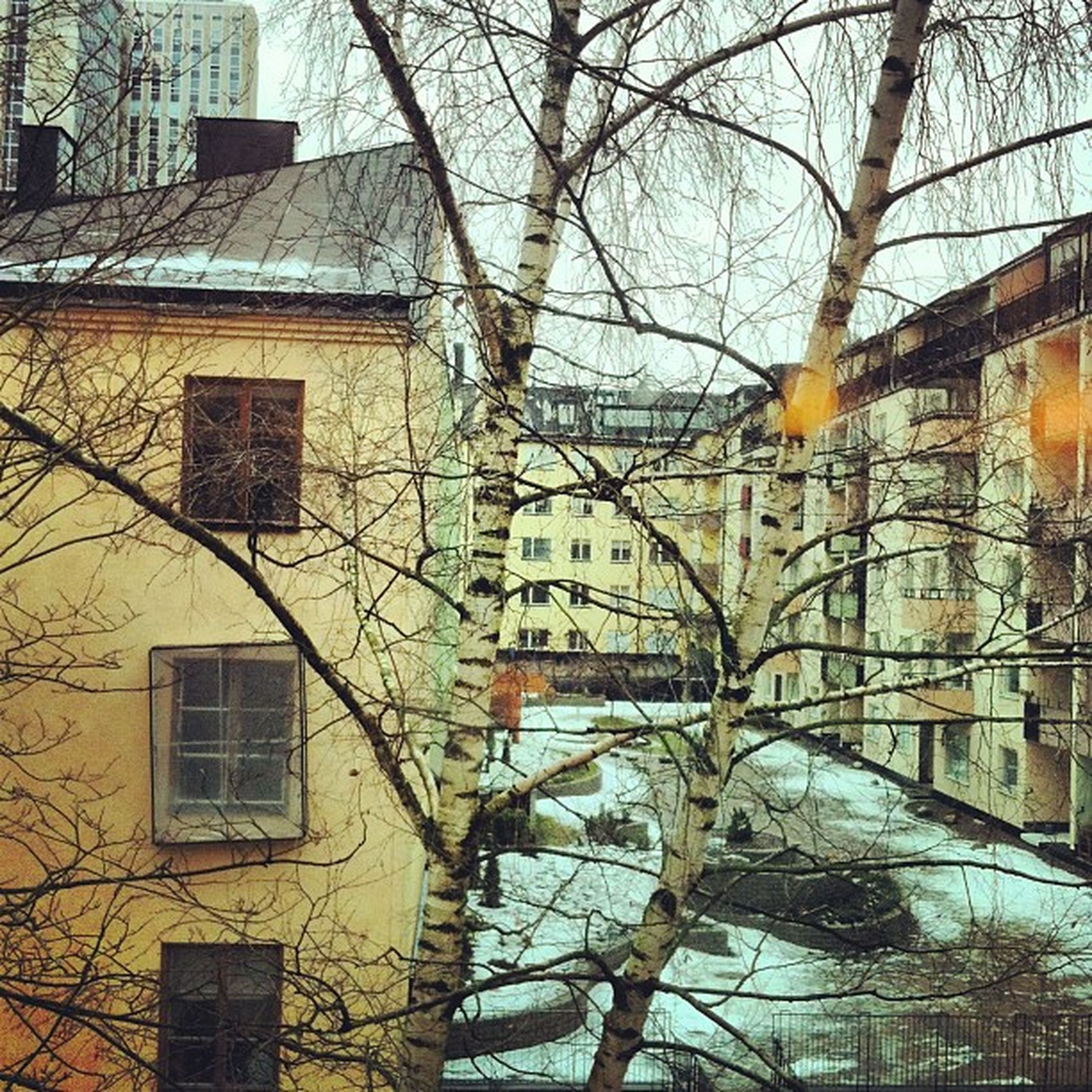 building exterior, architecture, built structure, bare tree, tree, branch, residential building, city, building, residential structure, window, house, season, outdoors, low angle view, no people, day, winter, snow, cold temperature