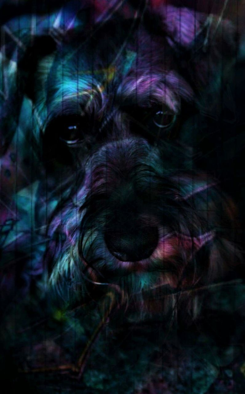 dog, domestic animals, pets, looking at camera, animal themes, one animal, mammal, portrait, no people, close-up, indoors, day