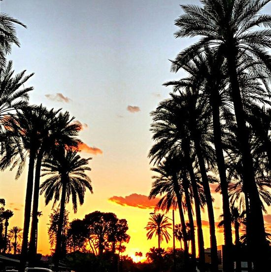 Another stunner. Sunset Palm Tree Silhouette No People Outdoors
