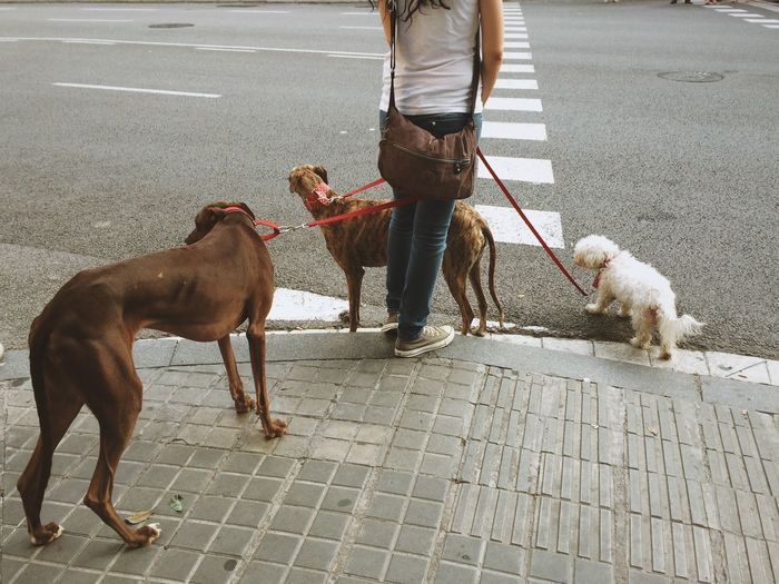 Low Section Of Woman Standing With Dogs On Footpath