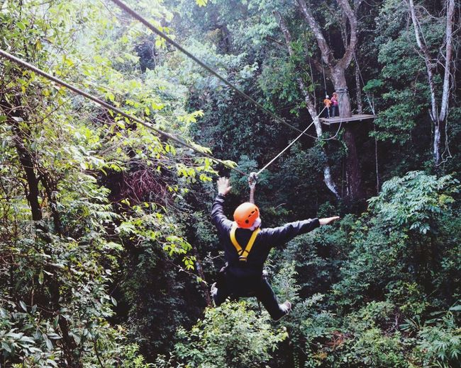 Tree One Person Rear View Forest Nature Extreme Sports Adventure Holding Day Outdoors Men Real People Beauty In Nature Rock Climbing One Man Only Only Men Rappelling People Enjoying Life Travel Destinations Enjoy The New Normal Enjoying Nature Moments