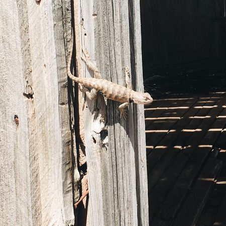 EyeEm Selects Wood - Material Door Textured  No People Outdoors Day Close-up Hinge Lizard Backgrounds Texture Textures And Surfaces Old West  Ghost Town Abandoned Abandoned Places Abandoned & Derelict Barnwood Old Wood Shadow Travel Tranquility Tranquil Scene Neutral Colors