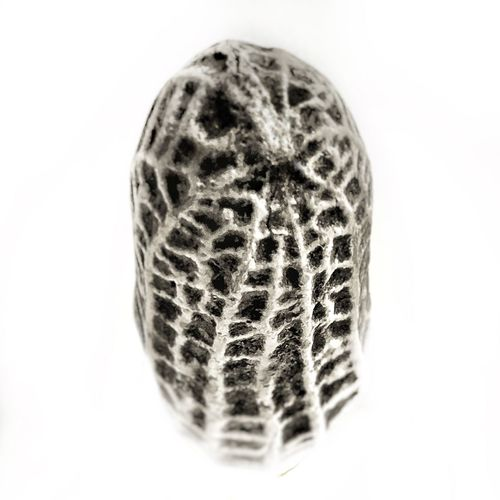 Peanut White Background Studio Shot No People Science Biology Close-up Goober Art Do Not Eat