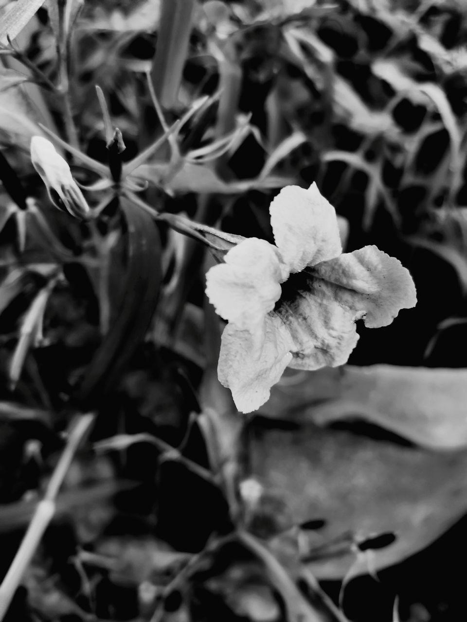 CLOSE-UP OF FRESH WHITE ROSE FLOWER