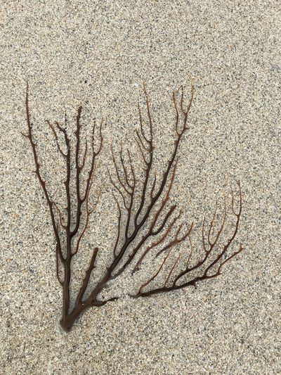 Seaweed Algae Beach Close-up Nature No People Ocean Outdoors Sand Sea Sea Plant Shore Shoreline Single Object Textured  Water-plant Weed