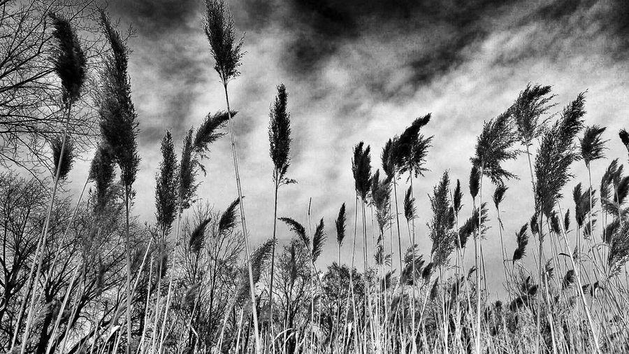 Plants against sky