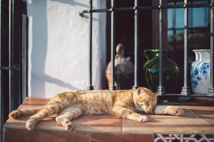 Cat sleeping in a window