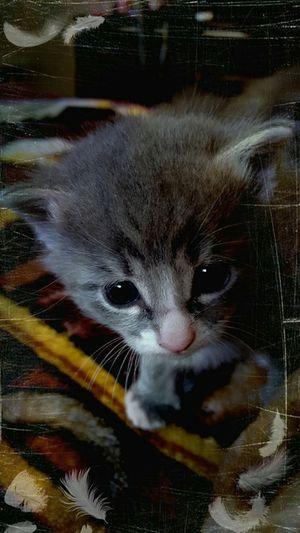Love Stella Cat♡ Kittens Cats 🐱 Hello World 2015  Enjoying Life Beautiful Check This Out