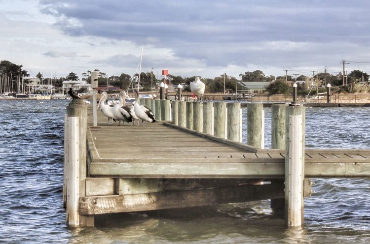 Check This Out Hello World Enjoying Life Relaxing Taking Photos Pelicans Nice Day EyeEm Nature Lover Birds IPS2016Nature IPS2016Landscape Pier EyeEm Best Shots - Landscape Landscape