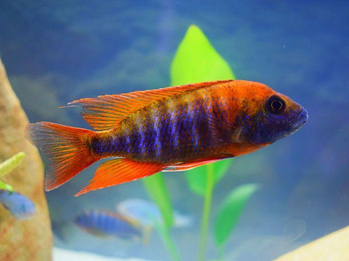 Close-up of fish in aquarium