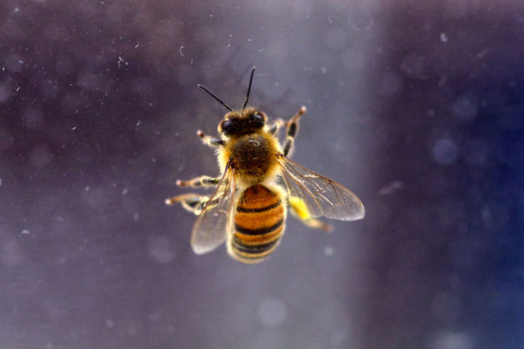 Close-up of bee on glass