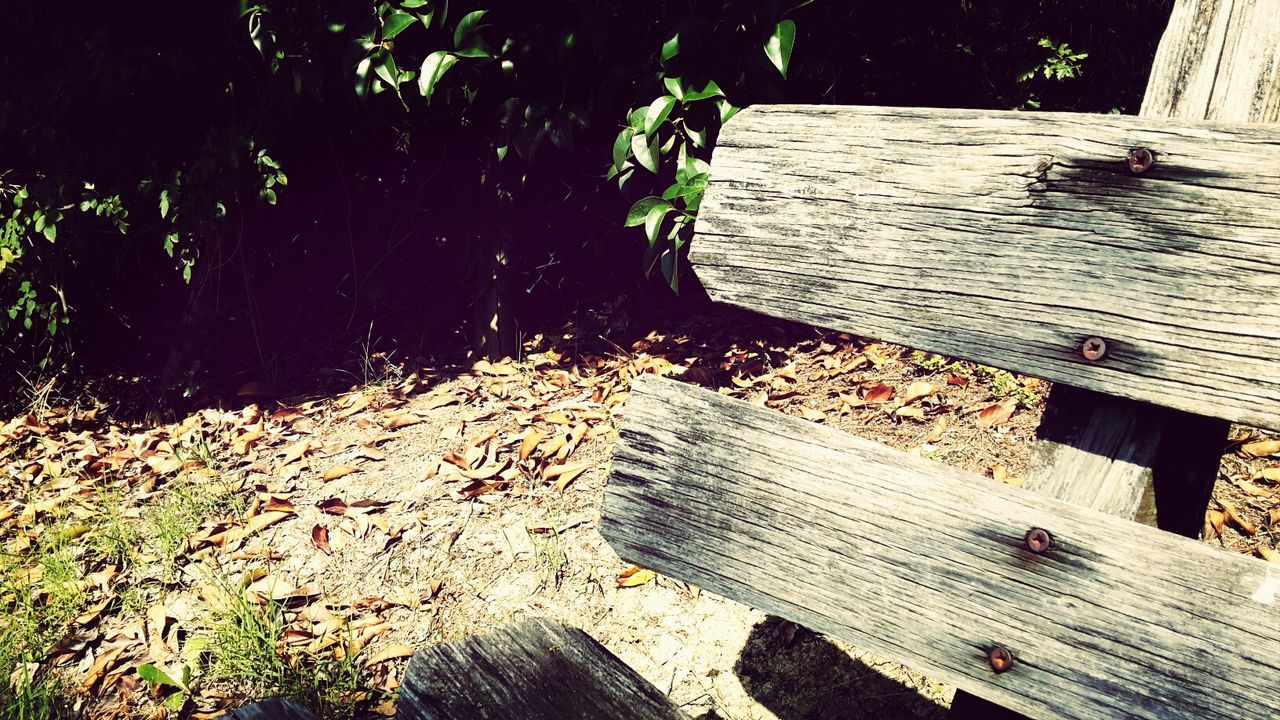 Close-up of wooden bench in park