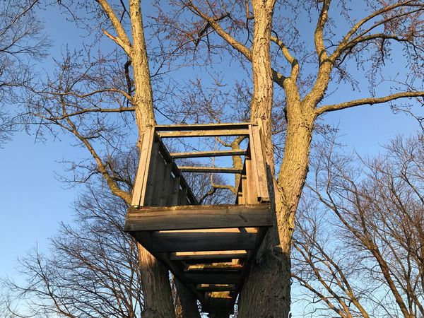 Tree House Tree And Sky Tree Low Angle View Bare Tree Sky Architecture No People Built Structure Day Nature Outdoors