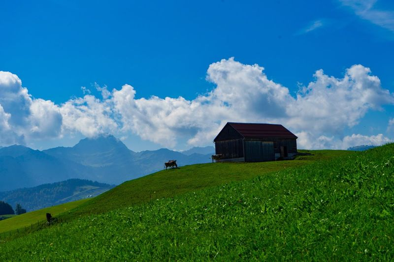 Home. Nature_collection Landscape Photography Landscape_Collection Medow Check This Out Switzerland Säntis Cows Cow Land Green Nature Naturephotography Green Color Landscape Blue Sky