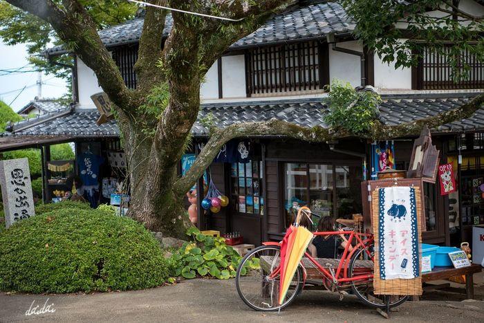 思い出になる、が正しいと思ってたけど、思い出を作りに行くのも悪くないものだと。 D750 Fukuokadeeps のこのしまアイランドパーク 能古島 Tree Japanese Traditional Architecture Building Exterior Day Outdoors Retro