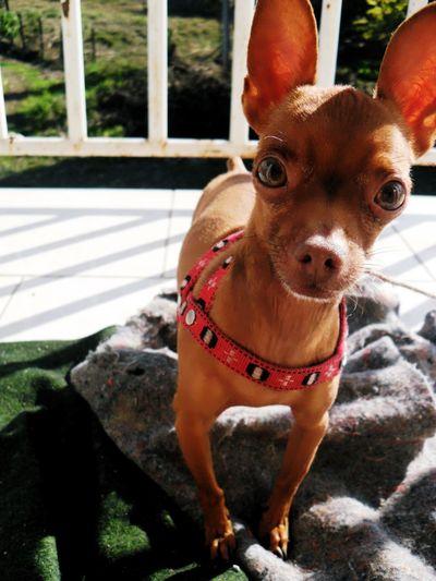 Dogs Cute Pets Enjoying Life Animals