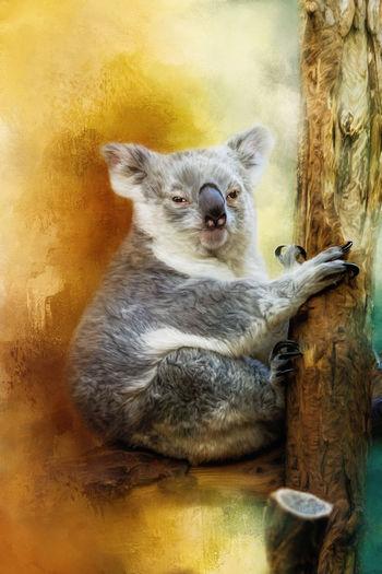 Koala Animal Themes Koala Koala Bear Koala Bears Koala In Tree Koala On A Tree Koala 🐨 Koalabear Koalas Mammal Paint Painted Painted Image Painted Pictures Painting Painting Art Paintings