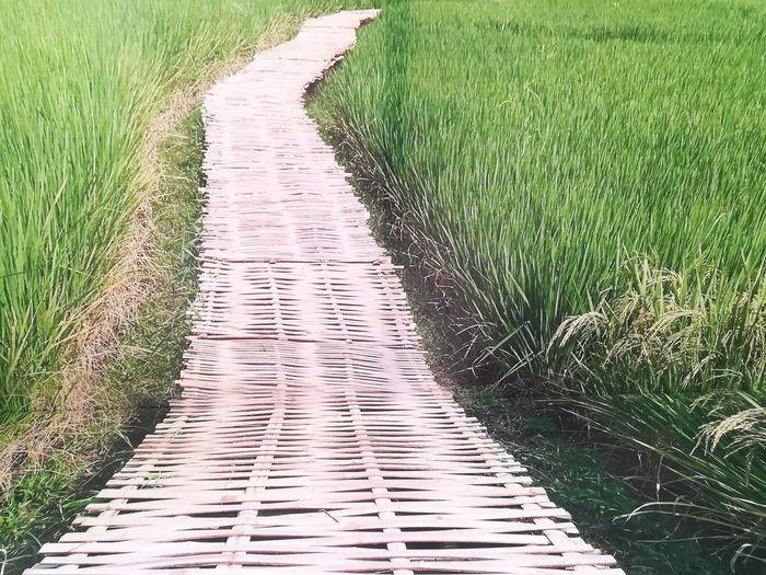 way Rice Paddy