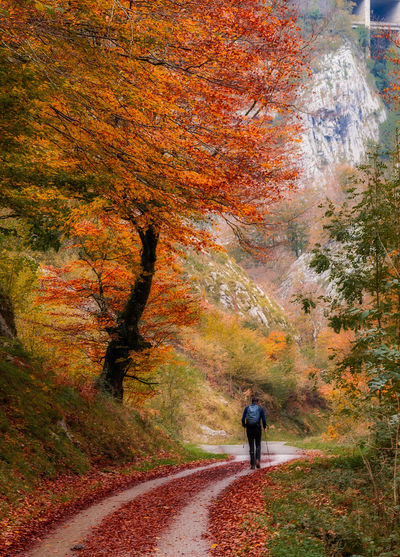 Rear view of woman walking on road during autumn