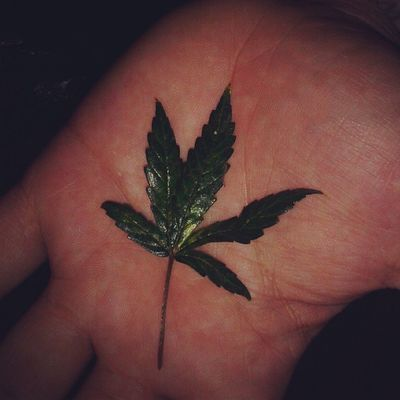Dro Drugs Piqueno Hydro Dodi Dopegame Marijuanaphotosubmission Kusharmy Kush