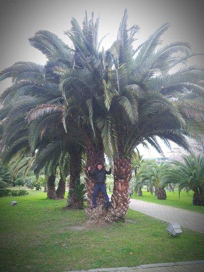 пальмы_2015