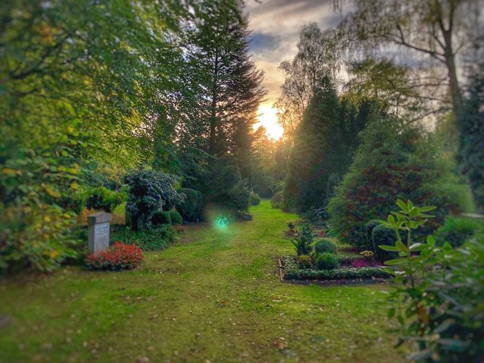 Graveyard Plant Tree Nature Growth Grass No People Beauty In Nature Tranquility Green Color Sunset Park Sky Sunlight Outdoors Park - Man Made Space Front Or Back Yard Tranquil Scene Footpath Field Garden