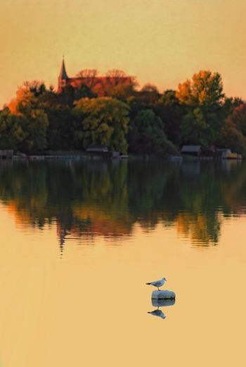 Water Reflection Lake Sky Waterfront Plant Nature Sunset Orange Color Beauty In Nature Religion Outdoors Church Autumn Focus On Foreground Seagull Schaalsee Trees Travel Destinations Evening Sky Fall Season