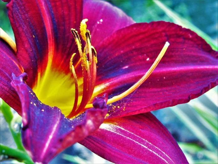 Nature Close-up Flower Flower Head Flowering Plant Lily Nature No People Outdoors Plant