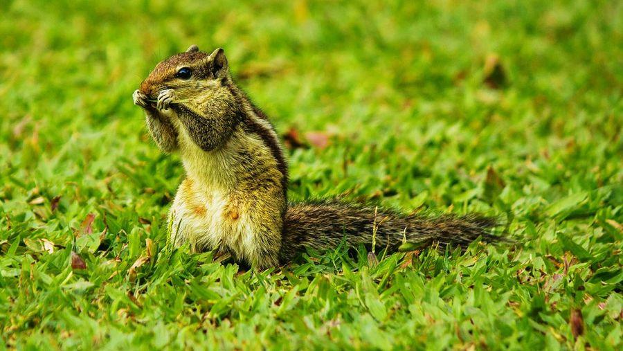 Nature First Eyeem Photo
