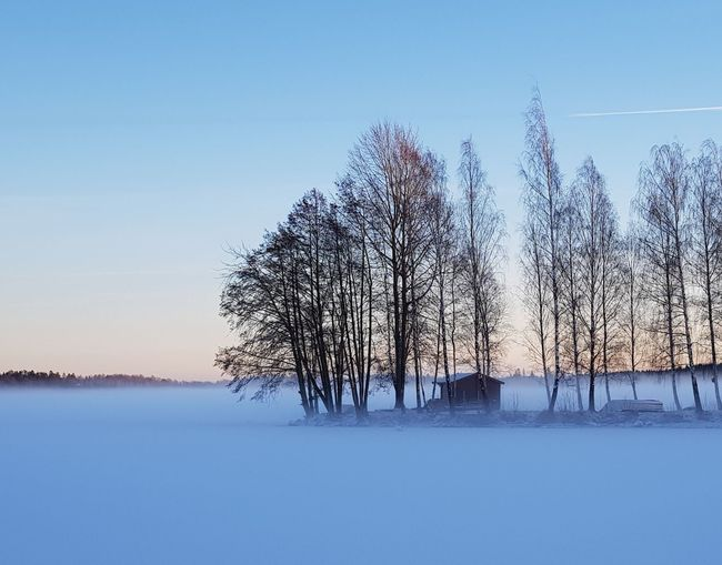 Bare trees on snow covered landscape against clear sky