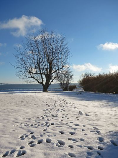 Bare tree on snow covered shore against sky