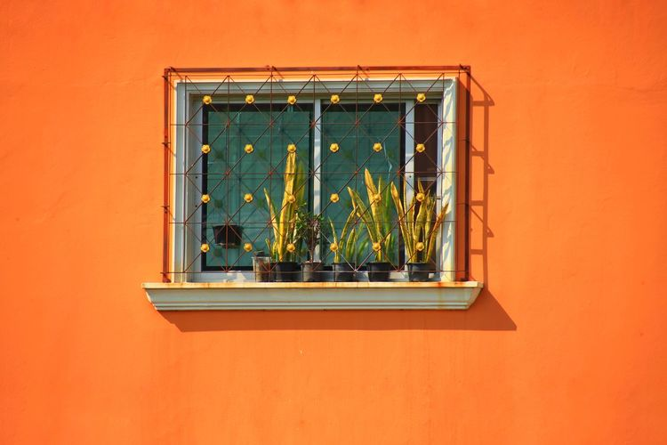 Potted plant on window sill of orange building