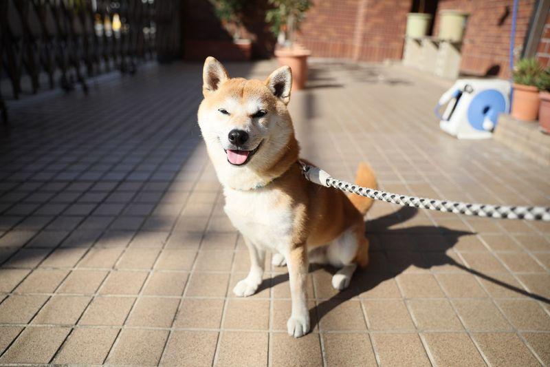 One Animal Dog Canine Mammal Domestic Animals Animal Themes Domestic Animal Portrait