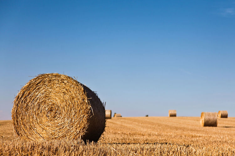 Rolling wheat bale Agriculture Bale  Blue Clear Sky Crop  Cultivated Land Farm Field Harvesting Hay Landscape Nature Rural Scene Tranquil Scene