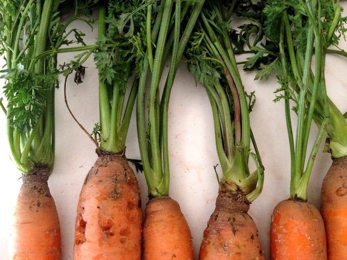 Marchewka Natural Healthy Eating Freshness Wellbeing No People Carrot Organic Raw Food